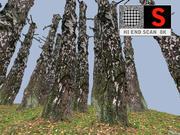 Birch sonbahar 8K 3d model