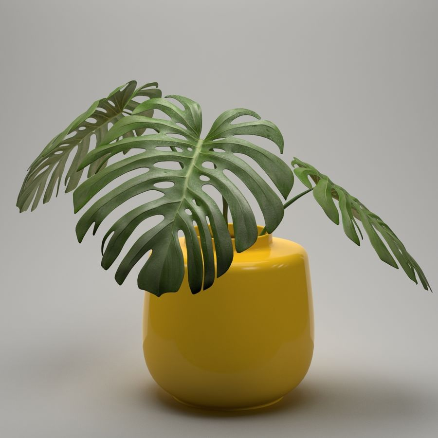 Monstera Plant royalty-free 3d model - Preview no. 4