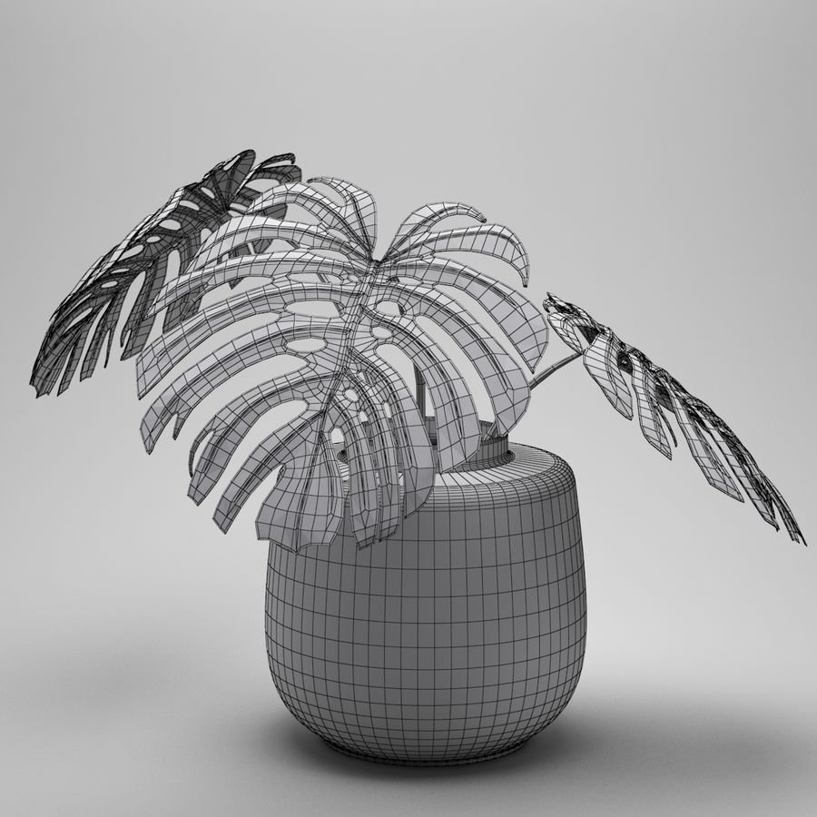 Monstera Plant royalty-free 3d model - Preview no. 12