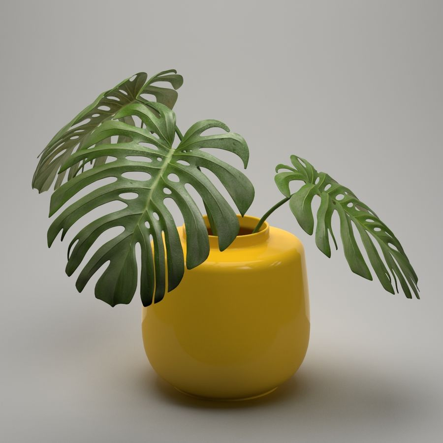 Monstera Plant royalty-free 3d model - Preview no. 2