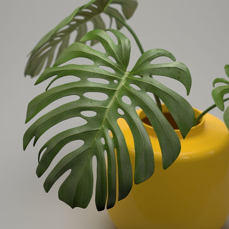 Monstera Plant royalty-free 3d model - Preview no. 5