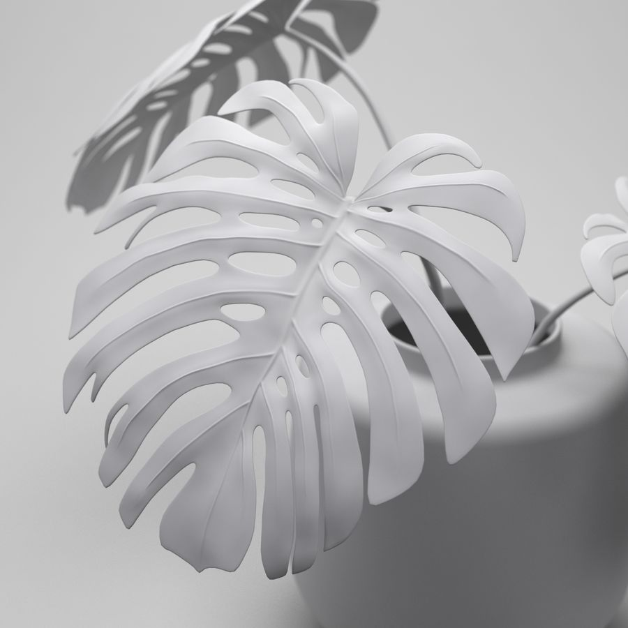 Monstera Plant royalty-free 3d model - Preview no. 7