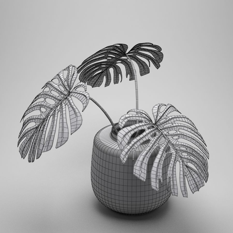 Monstera Plant royalty-free 3d model - Preview no. 9