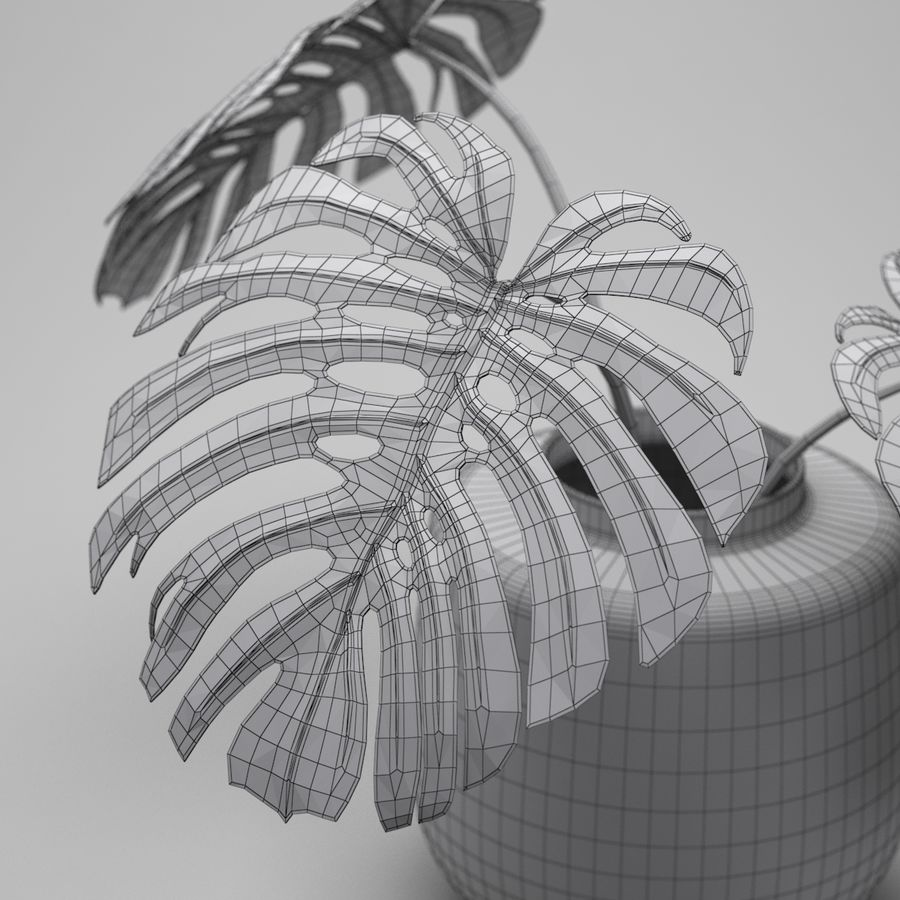 Monstera Plant royalty-free 3d model - Preview no. 10