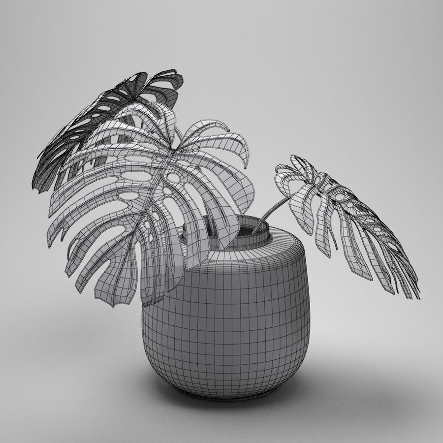 Monstera Plant royalty-free 3d model - Preview no. 8