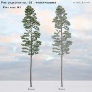 Pine-tree_01(vol_02)夏季+冬季 3d model