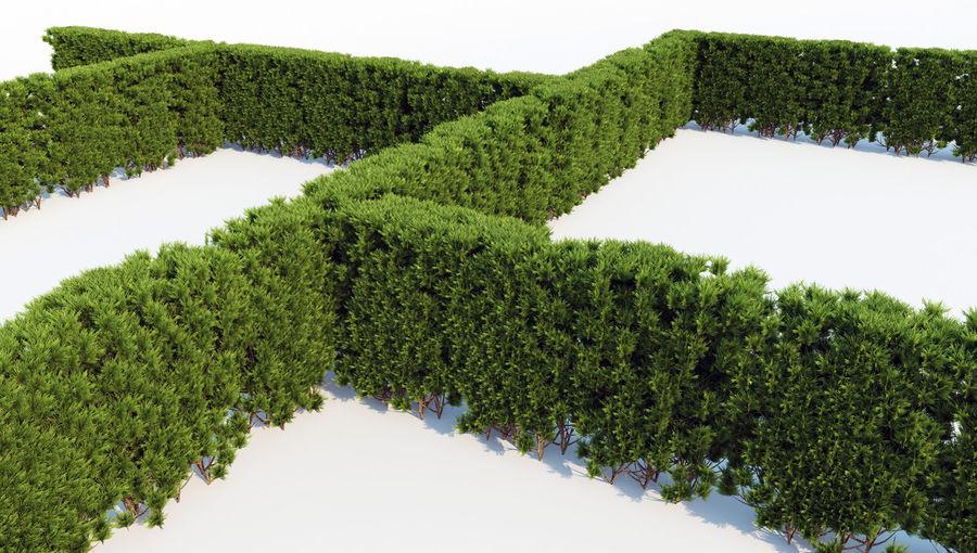 thuja hedge big 3d model 29 max obj fbx free3d