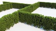 Thuja Hedge - Stor 3d model
