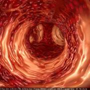 Artères humaines 3d model