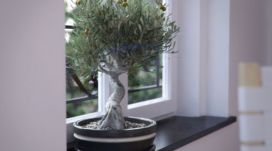 Bonsai Olive Tree royalty-free 3d model - Preview no. 4