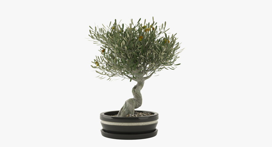 Bonsai Olive Tree royalty-free 3d model - Preview no. 2