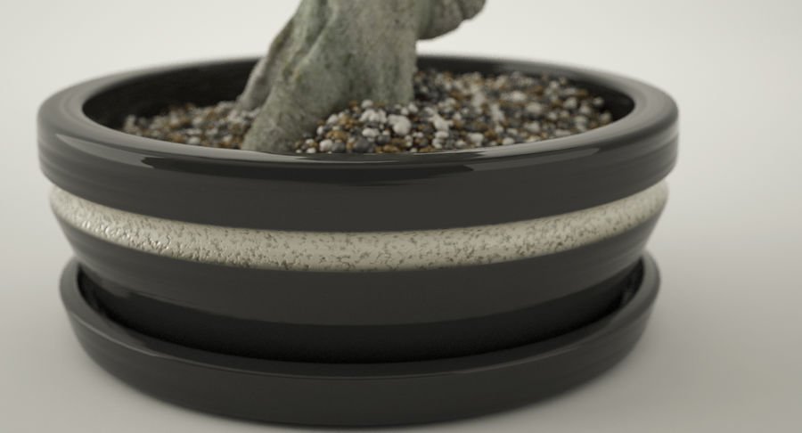 Bonsai Olive Tree royalty-free 3d model - Preview no. 7