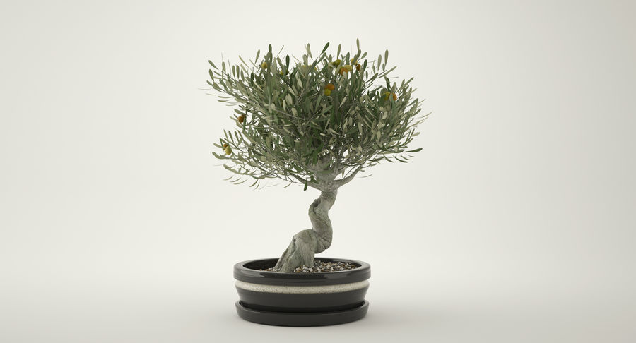 Bonsai Olive Tree royalty-free 3d model - Preview no. 3