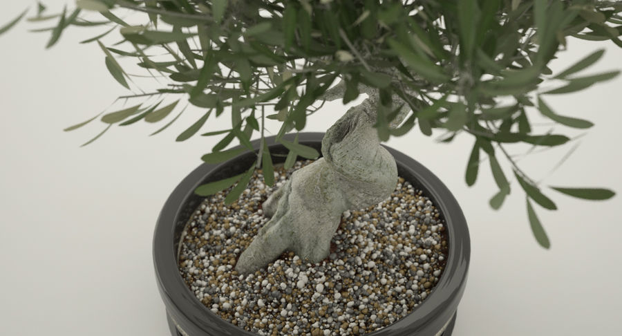 Bonsai Olive Tree royalty-free 3d model - Preview no. 6