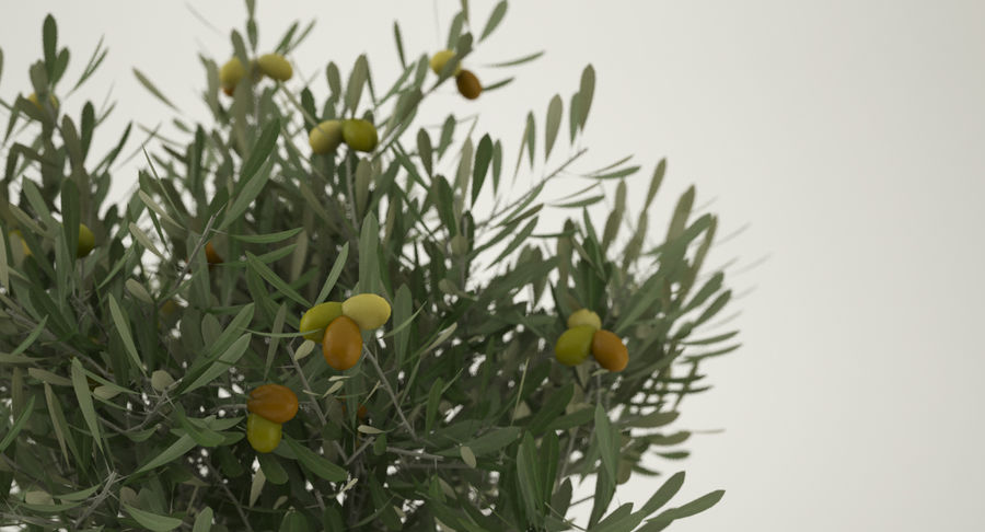 Bonsai Olive Tree royalty-free 3d model - Preview no. 9