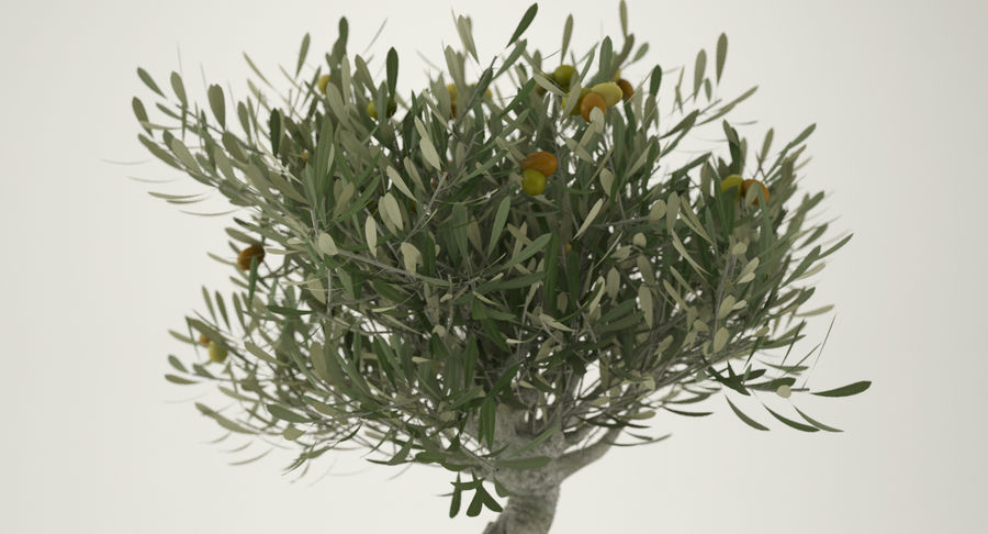 Bonsai Olive Tree royalty-free 3d model - Preview no. 8