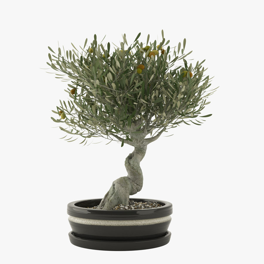 Bonsai Olive Tree royalty-free 3d model - Preview no. 1