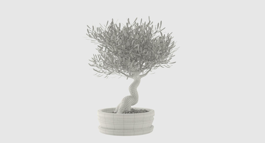 Bonsai Olive Tree royalty-free 3d model - Preview no. 10