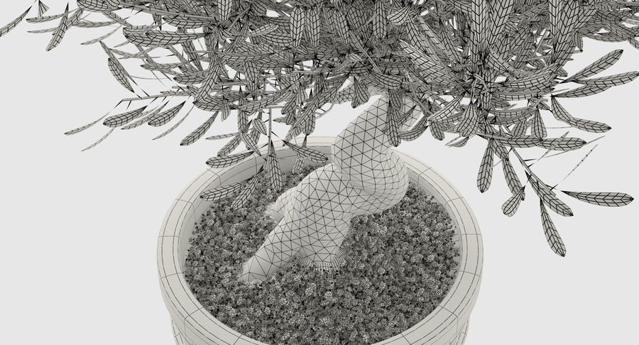 Bonsai Olive Tree royalty-free 3d model - Preview no. 12