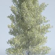 Huş ağacı 3d model