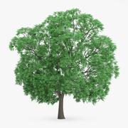Japon Kestane Ağacı 14m 3d model