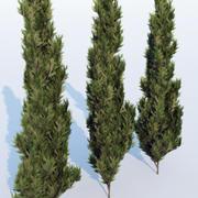 Thuja occidentalis Smaragd modelo 3d