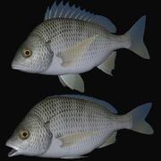 黄鳍鲷 3d model