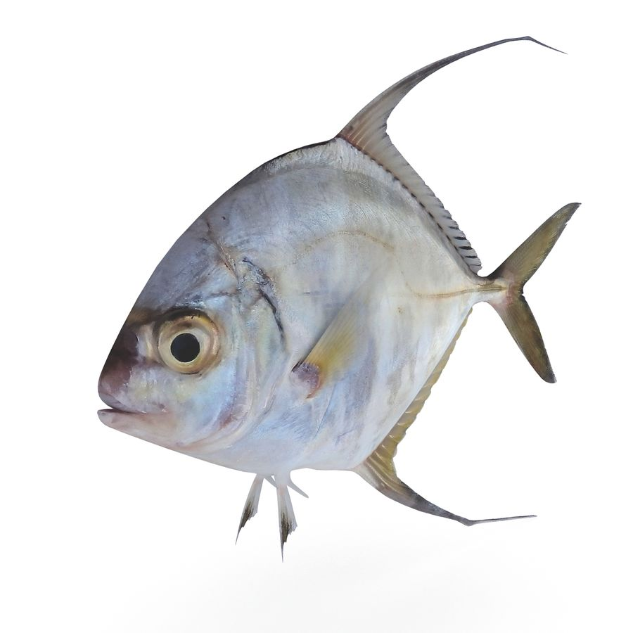 Threadfin Jack royalty-free 3d model - Preview no. 2
