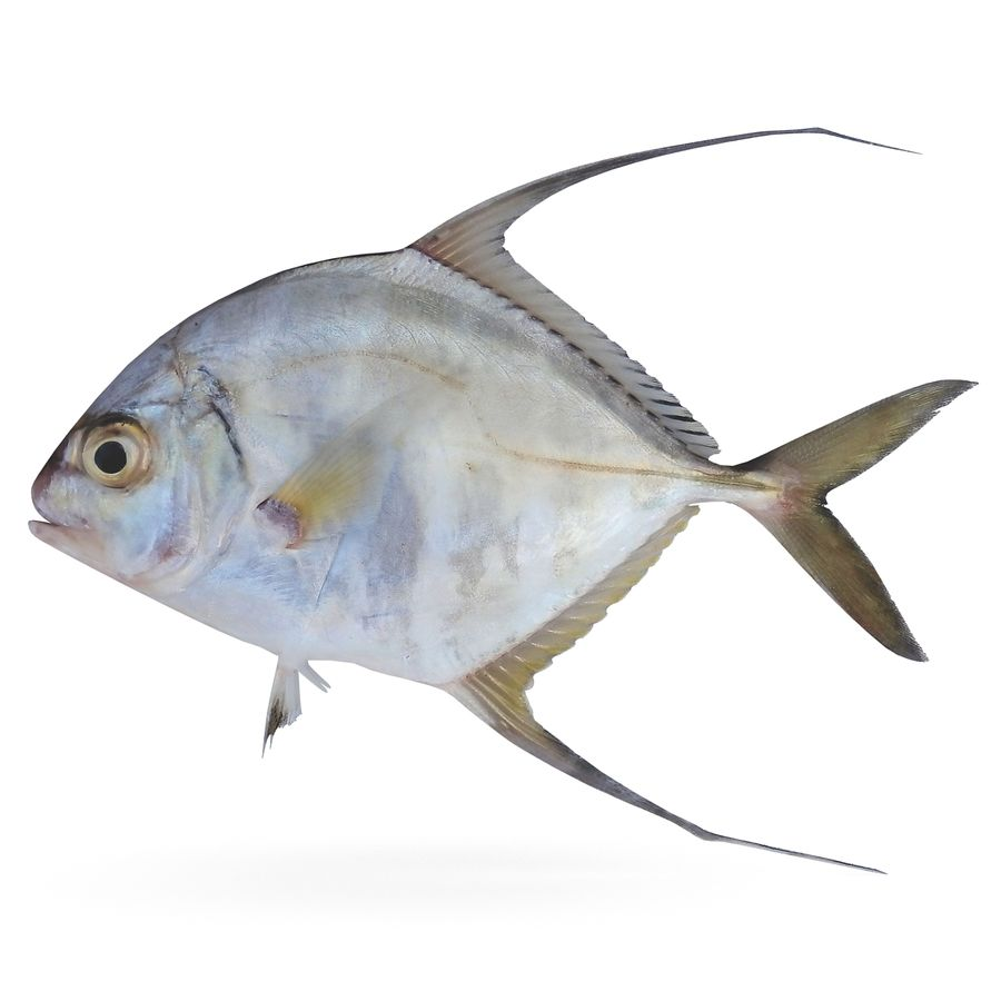 Threadfin Jack royalty-free 3d model - Preview no. 1