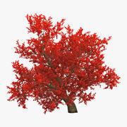古い赤いカエデの木の秋 3d model