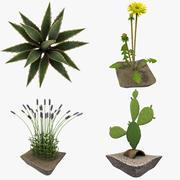 Collezione di piante 3d model