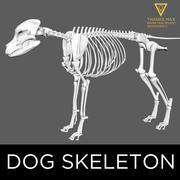 개 늑대 송곳니 해골 3d model