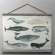 SCIENTIFIC WHALE TAPESTRY 3d model