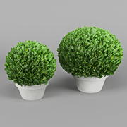 Decorative Bush 04 3d model