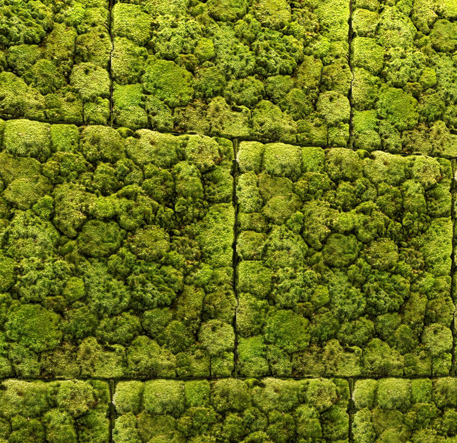 Fytowall Stone and moss royalty-free 3d model - Preview no. 4