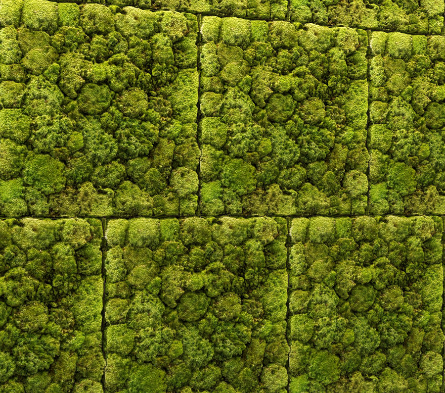 Fytowall Stone and moss royalty-free 3d model - Preview no. 5