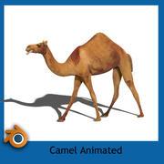kameel 3d model