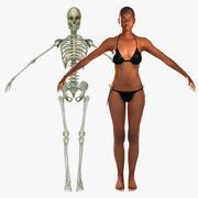 Human Skeleton / Female Skin Combo 3d model
