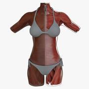 筋肉の解剖学女性胴体アフリカ系アメリカ人 3d model