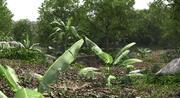 Scena dżungli 3d model