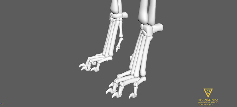 Chien Anatomie Canine royalty-free 3d model - Preview no. 72