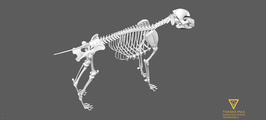 Chien Anatomie Canine royalty-free 3d model - Preview no. 66