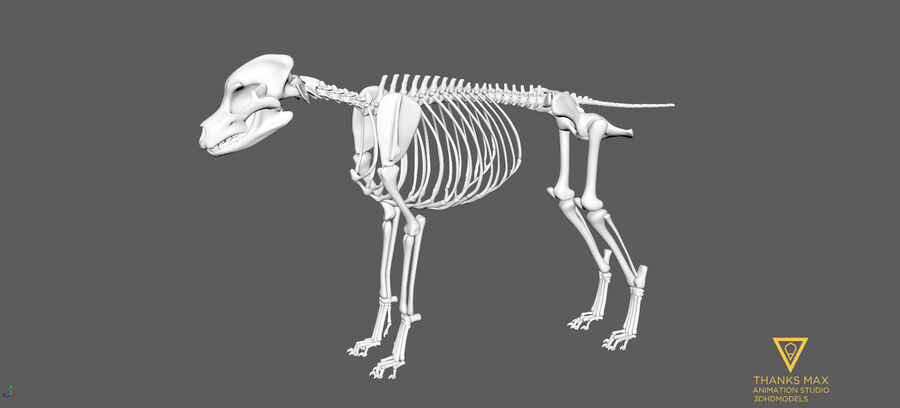 Chien Anatomie Canine royalty-free 3d model - Preview no. 60