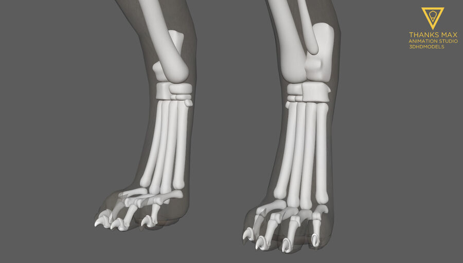 Chien Anatomie Canine royalty-free 3d model - Preview no. 16
