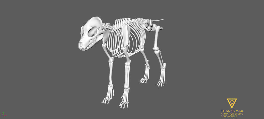 Chien Anatomie Canine royalty-free 3d model - Preview no. 62