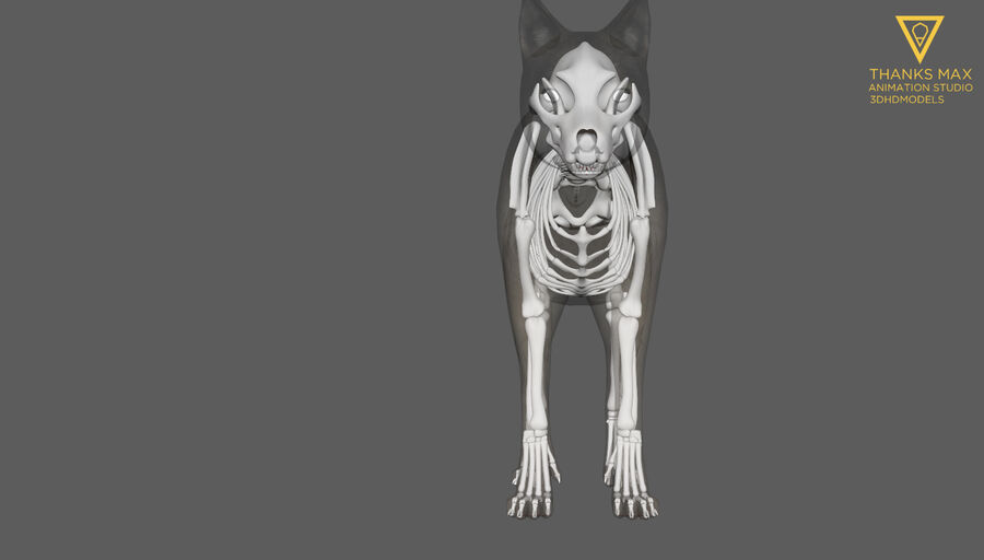 Chien Anatomie Canine royalty-free 3d model - Preview no. 15