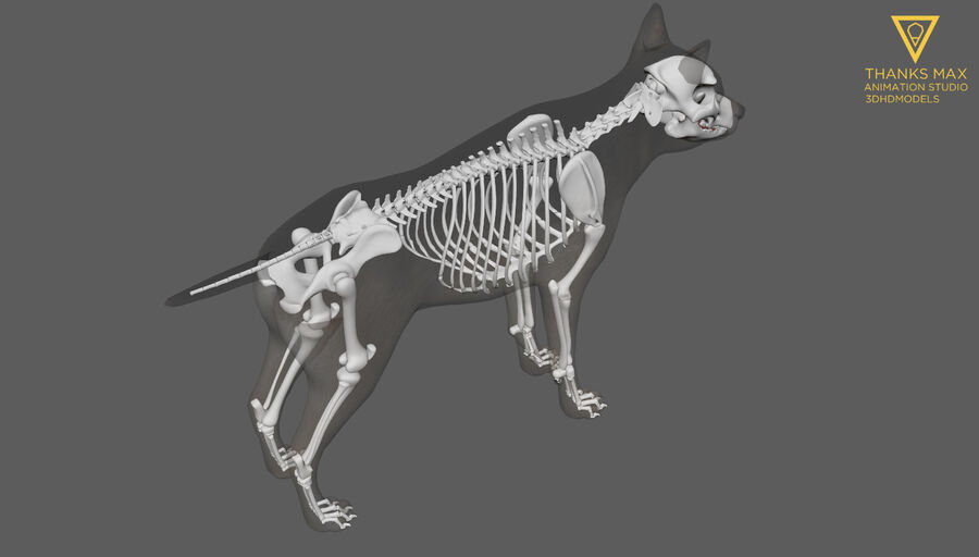 Chien Anatomie Canine royalty-free 3d model - Preview no. 35