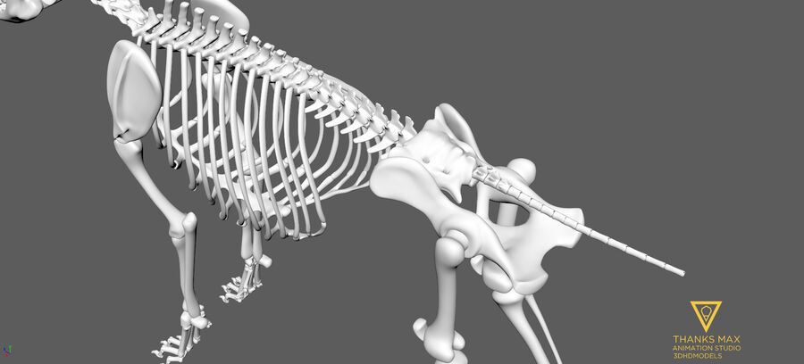 Chien Anatomie Canine royalty-free 3d model - Preview no. 82