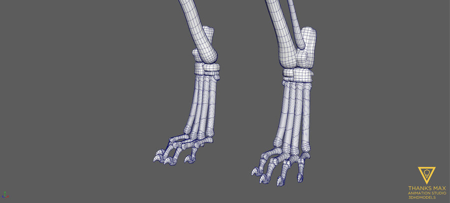 Chien Anatomie Canine royalty-free 3d model - Preview no. 56