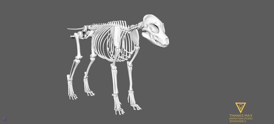 Chien Anatomie Canine royalty-free 3d model - Preview no. 64